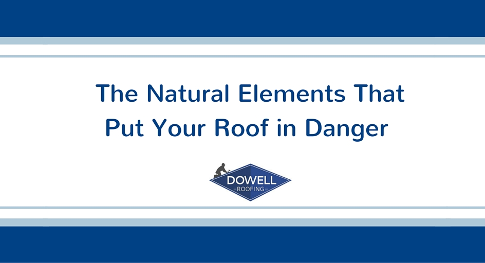 The Natural Elements That Put Your Roof in Danger